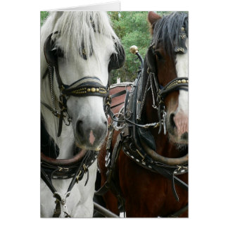 Horse Drawn Greeting Card