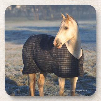 horse drink coaster