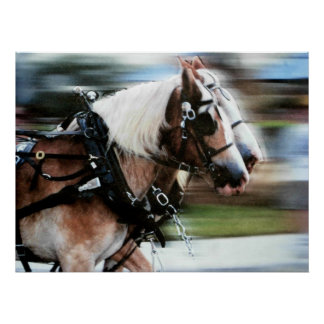 Horse Driven Carriage Horses Poster Photo Print