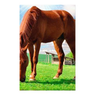horse eating grass 14 cm x 21.5 cm flyer