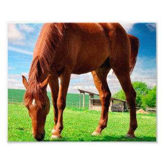horse eating grass photograph