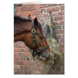 Horse eating hay card