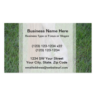 horse equine hind hooves one resting tail business cards