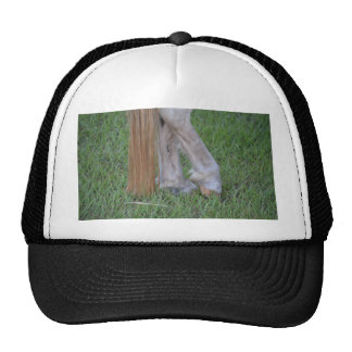 horse equine hind hooves one resting tail hats