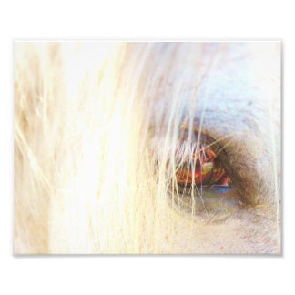 Horse Eye Close up 8 x 10 perfect to Frame Photo Print