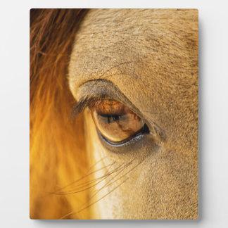Horse eye display plaques