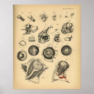 Horse Eye Ear Nose Anatomy 1908 Vintage Print