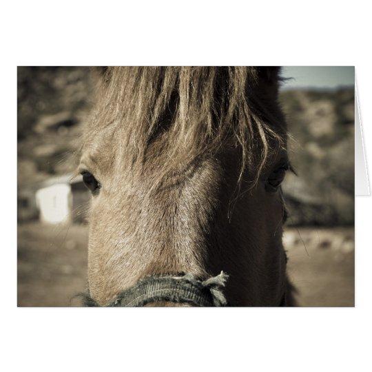 Horse Face Card