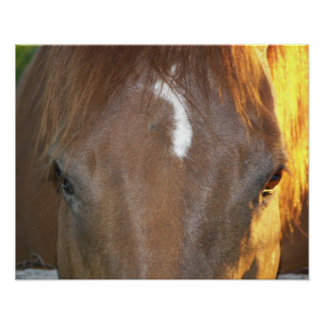 Horse Face Photo Poster