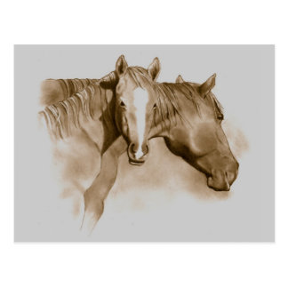 HORSE, FOAL: SEPIA: PENCIL ART POSTCARD