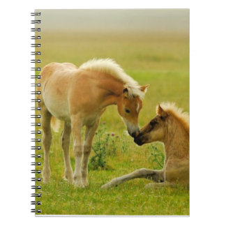 Horse Foals Notebook