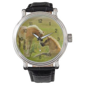 Horse Foals Watch