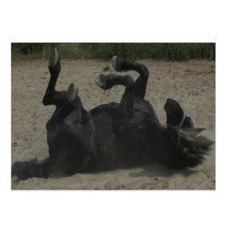 HORSE FROLICKING POSTCARD