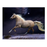 horse galloping postcard