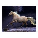 horse galloping postcard