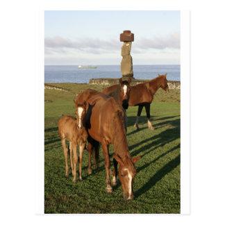 Horse grazing in Easter Island (Rapa Nui). Postcard