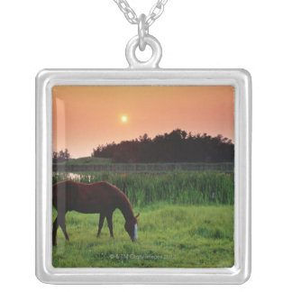 Horse Grazing in Field at Sunset Near Edmonton, Silver Plated Necklace