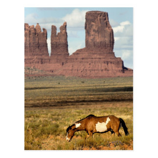 Horse Grazing, Monument Valley, UT Postcard