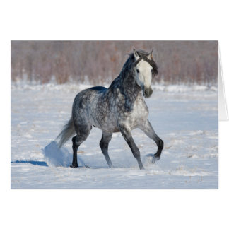 Horse Greeting Card - Dappled Grey Snow Stallion