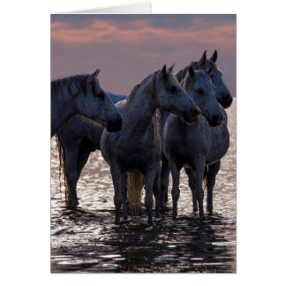Horse Greeting Card - Four Horses at Sunset