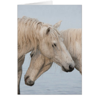 Horse Greeting Card - The Power of Two