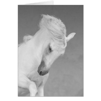 Horse Greeting Card - White Stallion Tosses Head