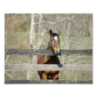 Horse Greetings 10x8 Photographic Print