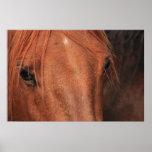 Horse Hide Poster