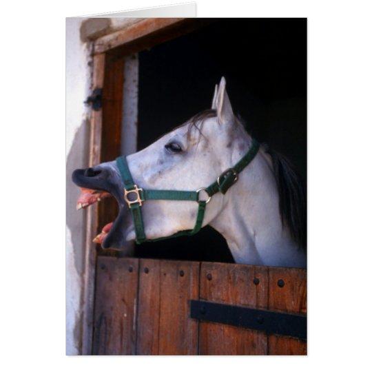 horse holler card