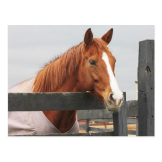 Horse In A Blanket At The Fence Corner Postcard