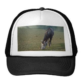 Horse_In_A_Paddock,_Truckers_Cap. Cap
