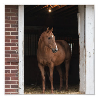 Horse in Barn Photo Print