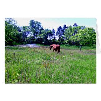 Horse in Beautiful Pasture Card