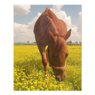 Horse in Field Photo Print