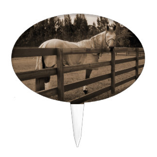 Horse in fly clothes sepia looking back over fence cake picks