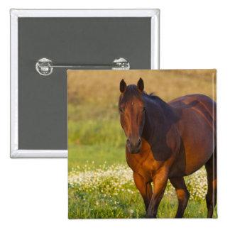 Horse in pasture near Pullman, Washington 15 Cm Square Badge