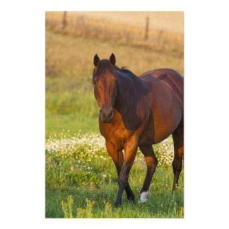Horse in pasture near Pullman, Washington Photo Print