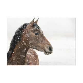 Horse in snow canvas print