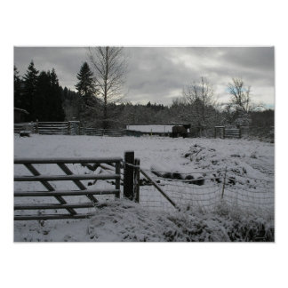 Horse in Snowy Pasture Poster