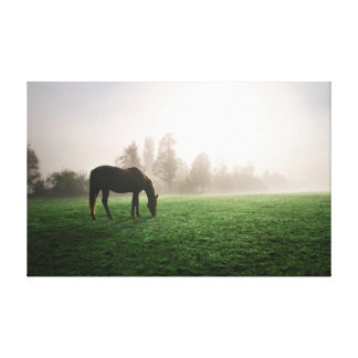 Horse in the morning mist canvas print