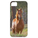 Horse In The Woods iPhone 5 Case