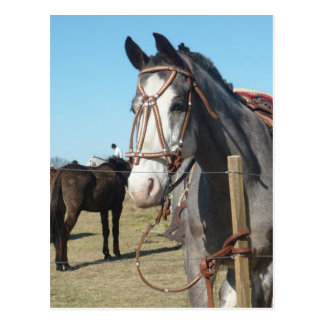 Horse in Yacanto, Córdoba Postcard
