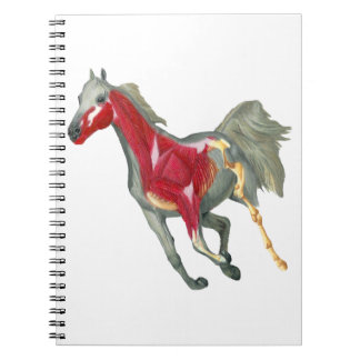 Horse Internal Structure Notebook