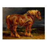 Horse - James Ward Postcard