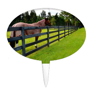 Horse looking down fence path cake picks