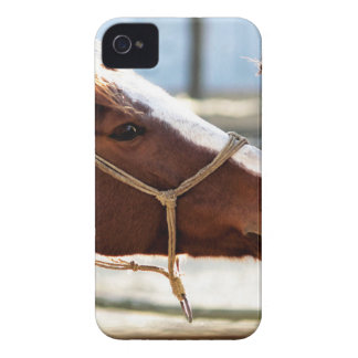 Horse Love iPhone 4 Case-Mate Cases