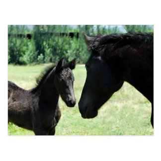 Horse love mom and baby postcard