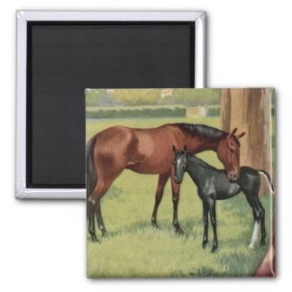 Horse Mare Foal Equestrian Vintage Image Square Magnet