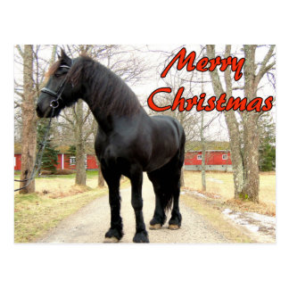 Horse Merry Christmas.jpg Postcard