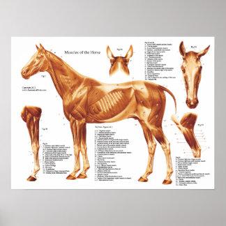 Horse Muscle Anatomy Chart